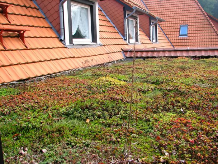 green-roof-Lineevita